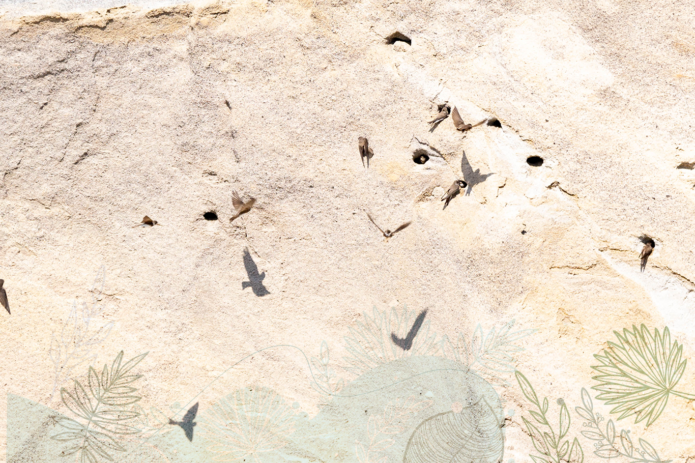 Birds nesting in sandstone